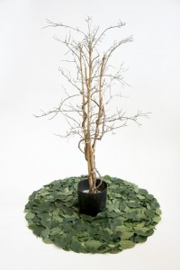 http://huberhuber.com/files/gimgs/th-163_163_ficus.jpg