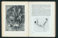 http://huberhuber.com/files/gimgs/th-201_201_das-wunder-buch-der-pflanzenweltseiten-2hp.jpg