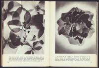 http://huberhuber.com/files/gimgs/th-201_201_pflanzenwunder-seiten2-hp.jpg