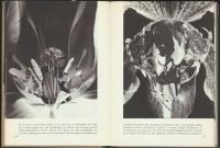 http://huberhuber.com/files/gimgs/th-201_201_pflanzenwunder-seiten3-hp.jpg