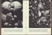 http://huberhuber.com/files/gimgs/th-201_201_pflanzenwunder-seiten4-hp.jpg