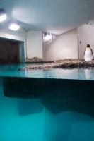 http://huberhuber.com/files/gimgs/th-208_208_pinguin-huberhuber-hp.jpg