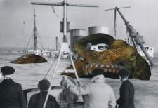 http://huberhuber.com/files/gimgs/th-235_235_architeuthis-monachus1huberhuber.jpg