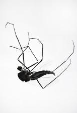 http://huberhuber.com/files/gimgs/th-29_29_lebensraum-atelier-muecke-iii.jpg