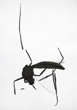 http://huberhuber.com/files/gimgs/th-29_29_lebensraum-atelierinsekt-iii.jpg