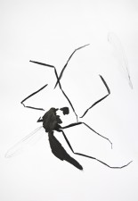 http://huberhuber.com/files/gimgs/th-29_29_lebensraum-atelierkleine-muecke-fragmente-iii.jpg