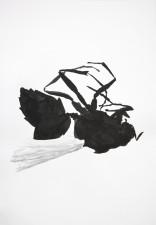 http://huberhuber.com/files/gimgs/th-29_29_lebensraum-atelierwespe-ii.jpg