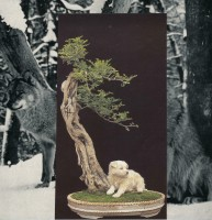 http://huberhuber.com/files/gimgs/th-40_40_wolfhundbonsai.jpg