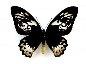 http://huberhuber.com/files/gimgs/th-62_62_leichter-als-21-gramm-ornithoptera-aesacus.jpg