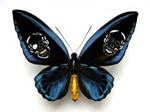 http://huberhuber.com/files/gimgs/th-62_62_leichter-als-21-gramm-ornithoptera-priamus-urvillianus.jpg